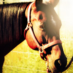 Healing Hearts Horse Rescue – June 22nd, 2014
